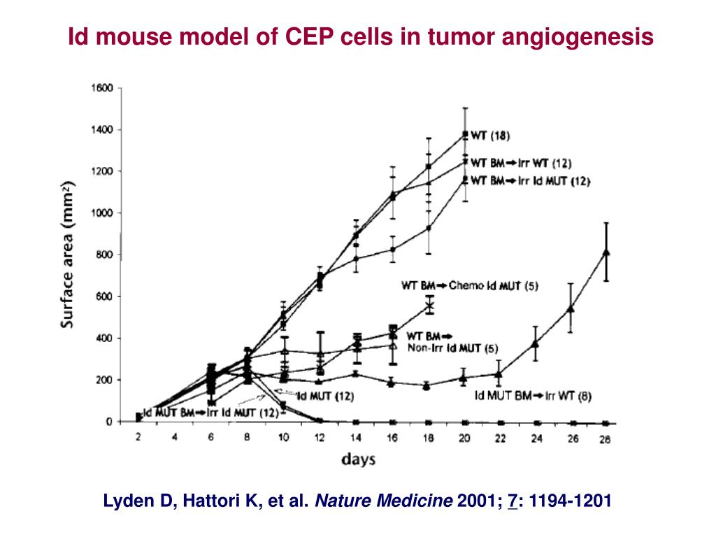 Id mouse model of CEP cells in tumor angiogenesis
