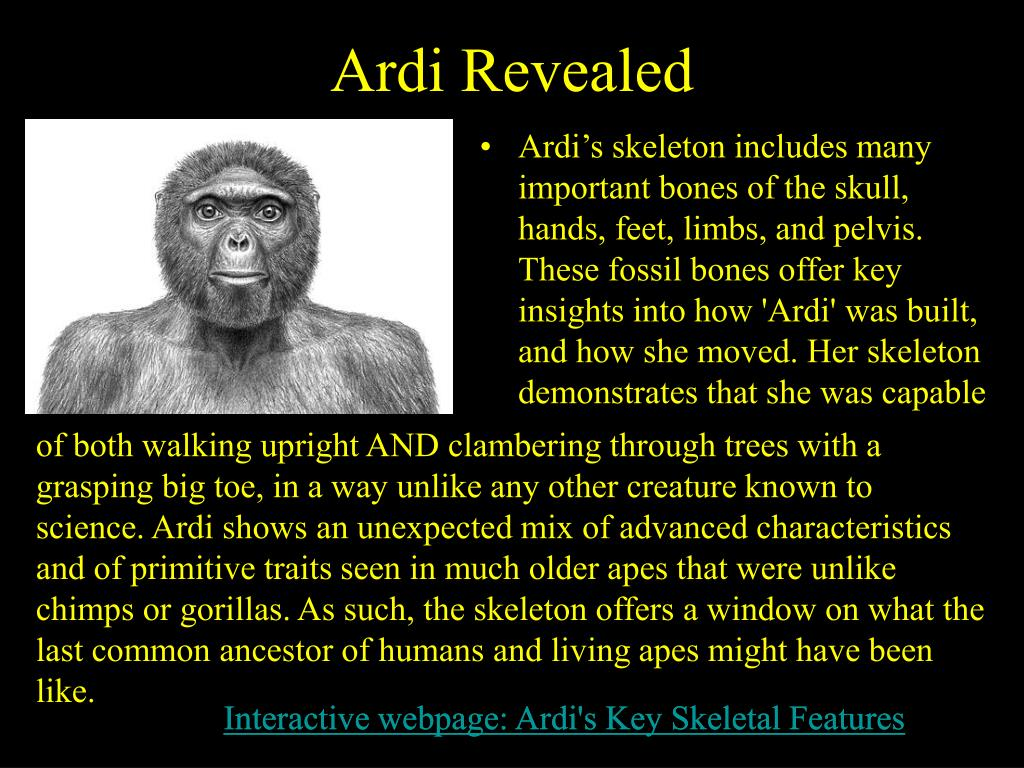 Ardi Revealed