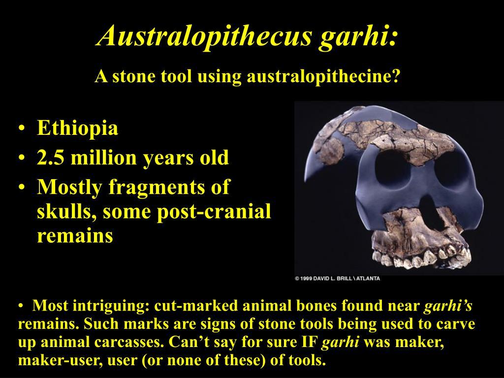 Australopithecus garhi: