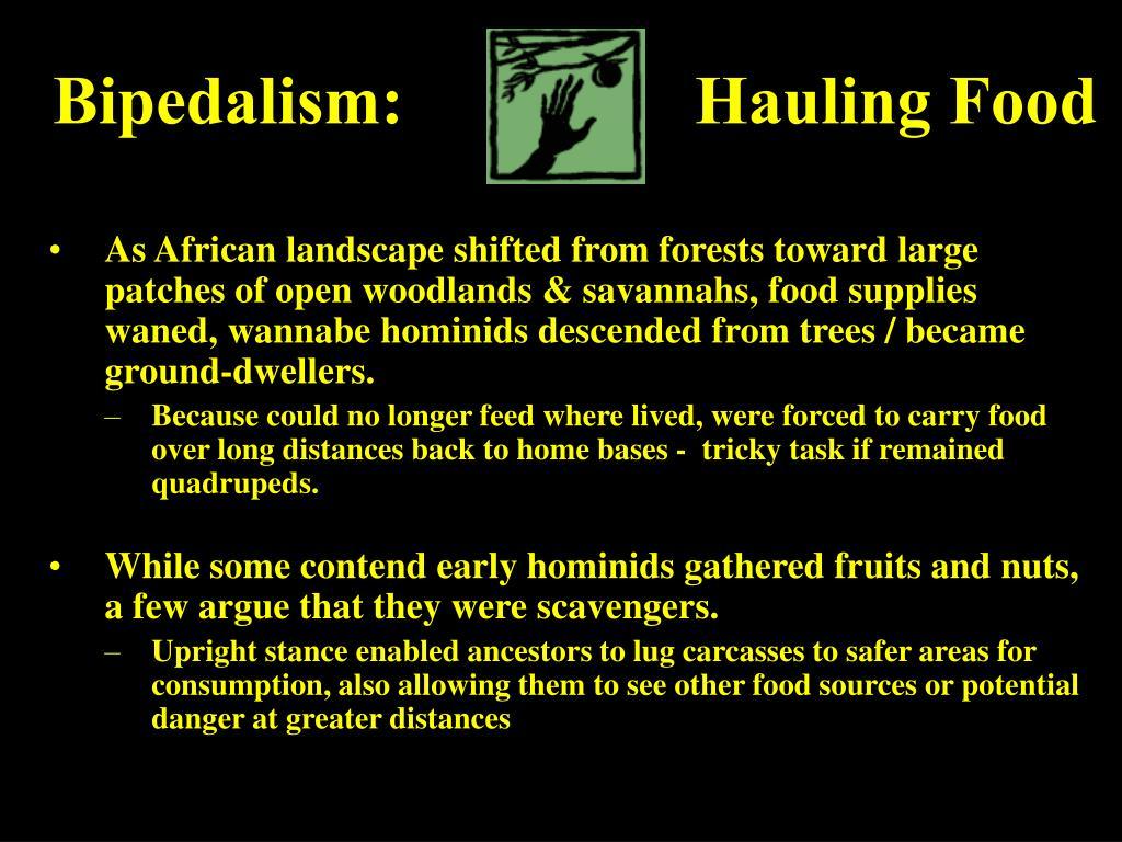 Bipedalism:                 Hauling Food