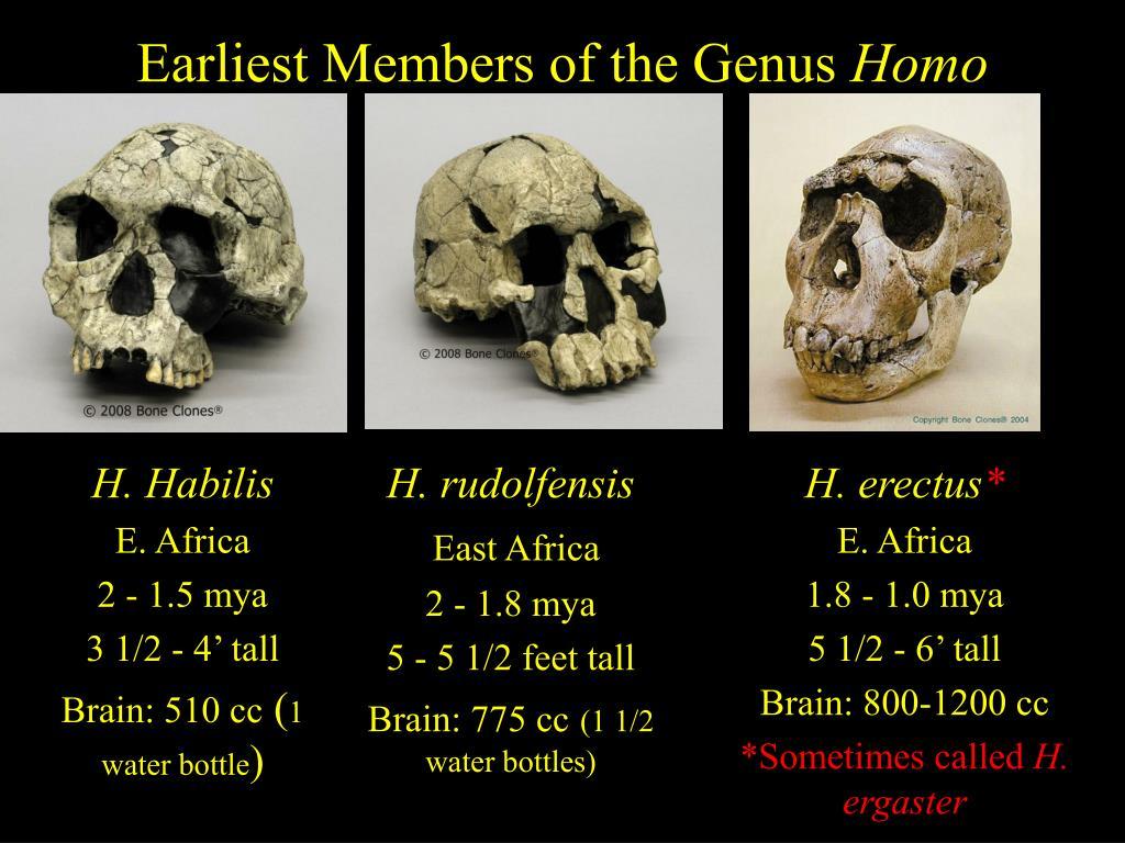 Earliest Members of the Genus