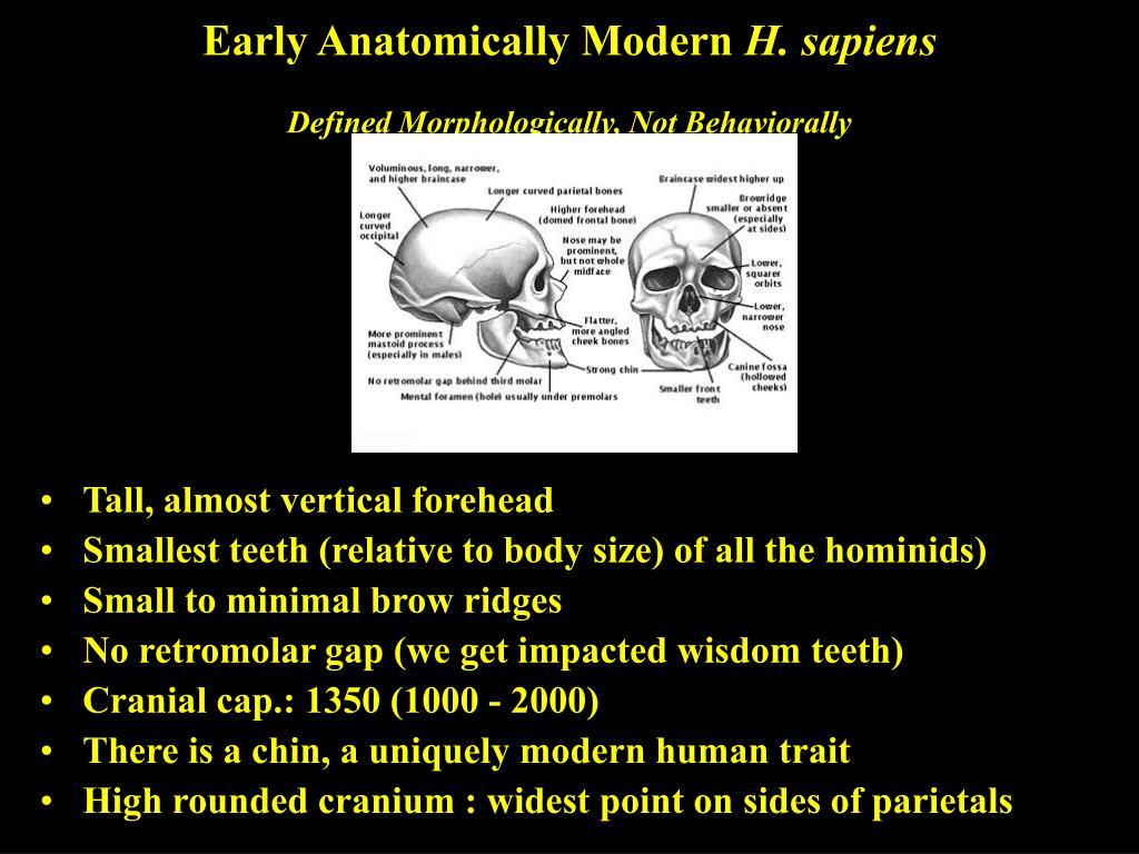 Early Anatomically Modern