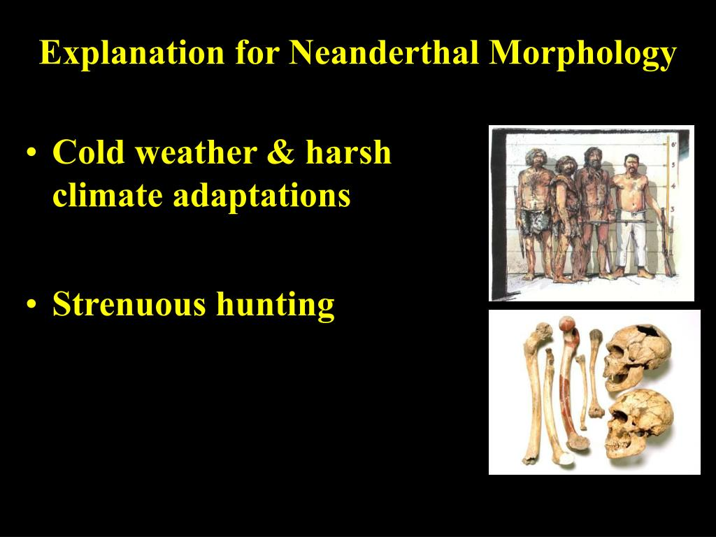 Explanation for Neanderthal Morphology