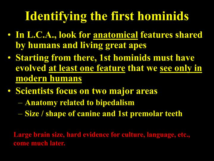 Identifying the first hominids