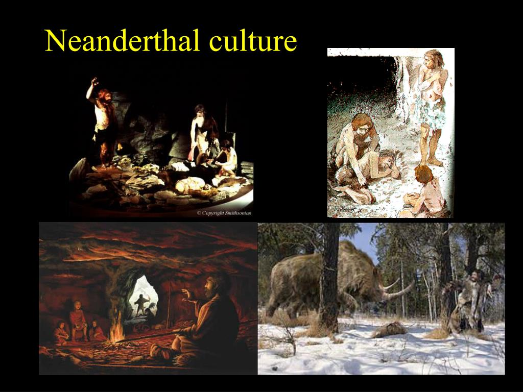 Neanderthal culture