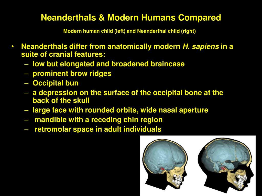 Neanderthals & Modern Humans Compared