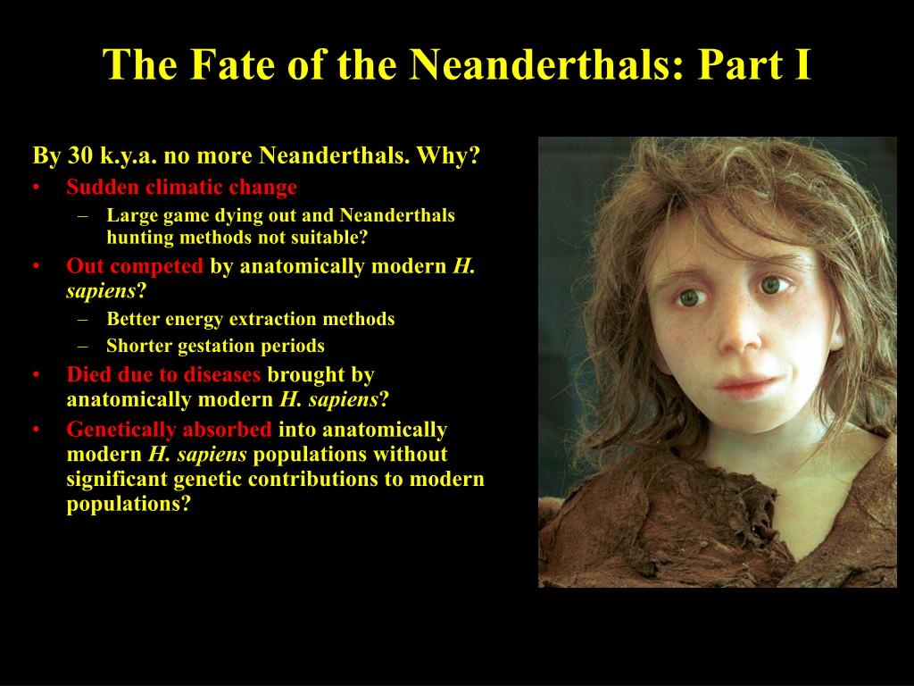 The Fate of the Neanderthals: Part I
