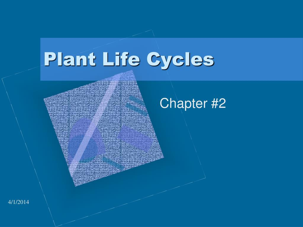 plant life cycles l.