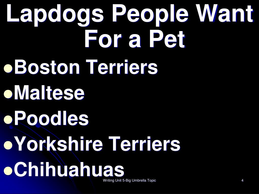 Lapdogs People Want For a Pet