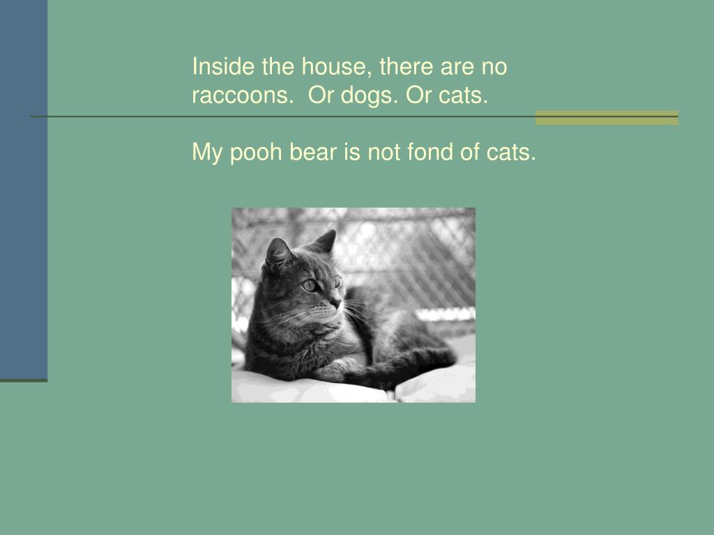Inside the house, there are no raccoons.  Or dogs. Or cats.