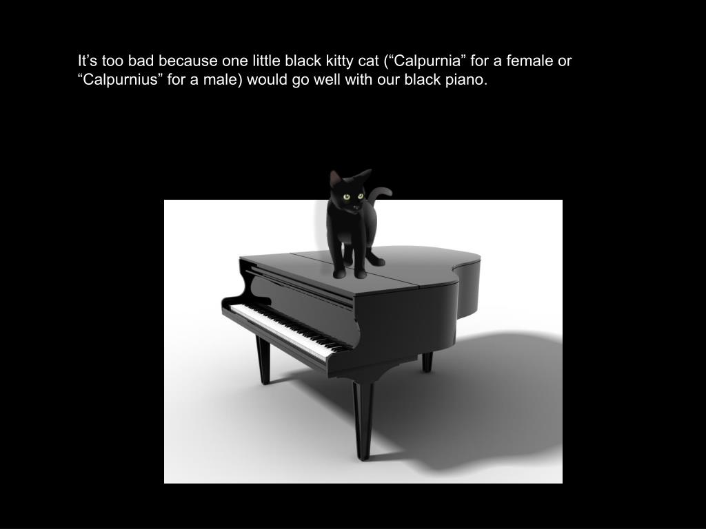 "It's too bad because one little black kitty cat (""Calpurnia"" for a female or ""Calpurnius"" for a male) would go well with our black piano."