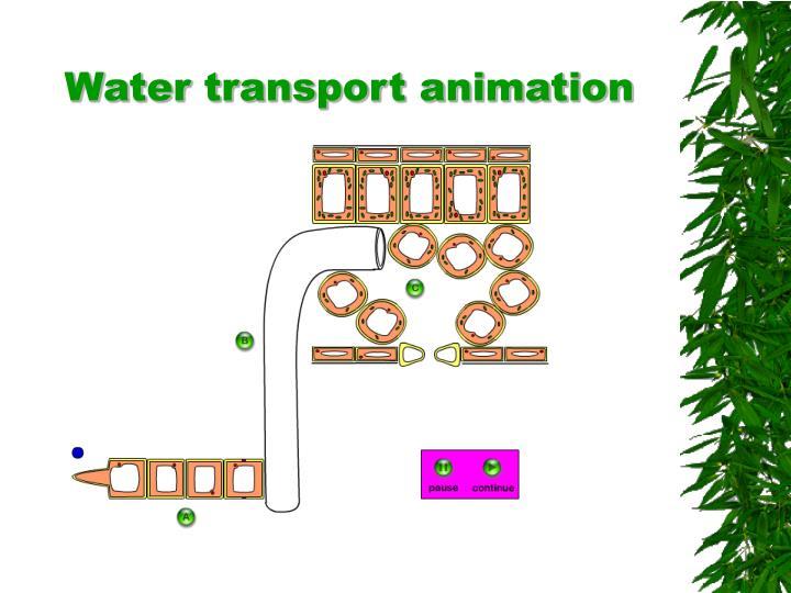 Transport In Plants PowerPoint