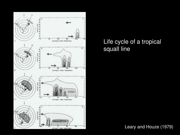 Life cycle of a tropical