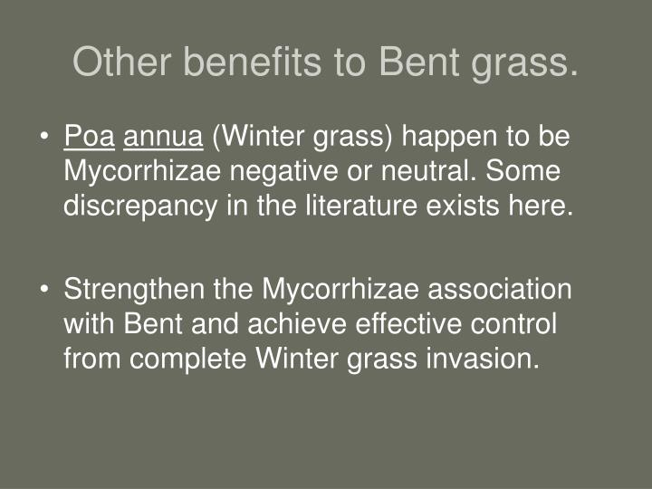 Other benefits to Bent grass.