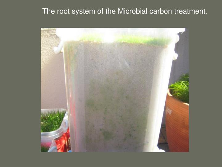 The root system of the Microbial carbon treatment