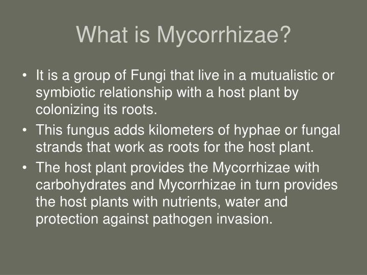What is Mycorrhizae?