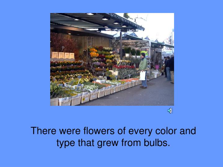 There were flowers of every color and type that grew from bulbs.