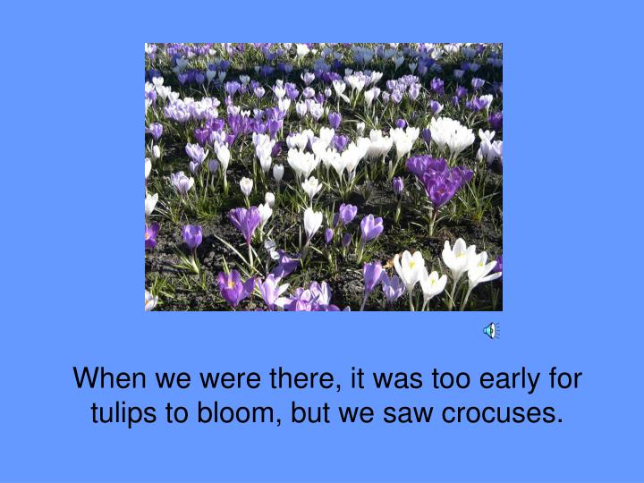 When we were there, it was too early for tulips to bloom, but we saw crocuses.