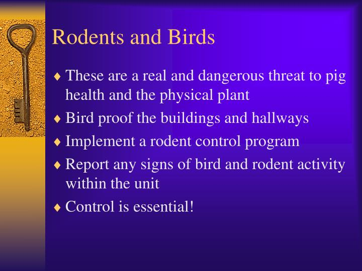 Rodents and Birds