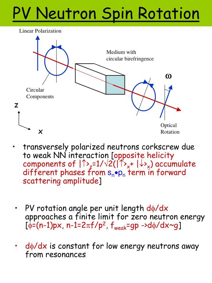 transversely polarized neutrons corkscrew due to weak NN interaction [