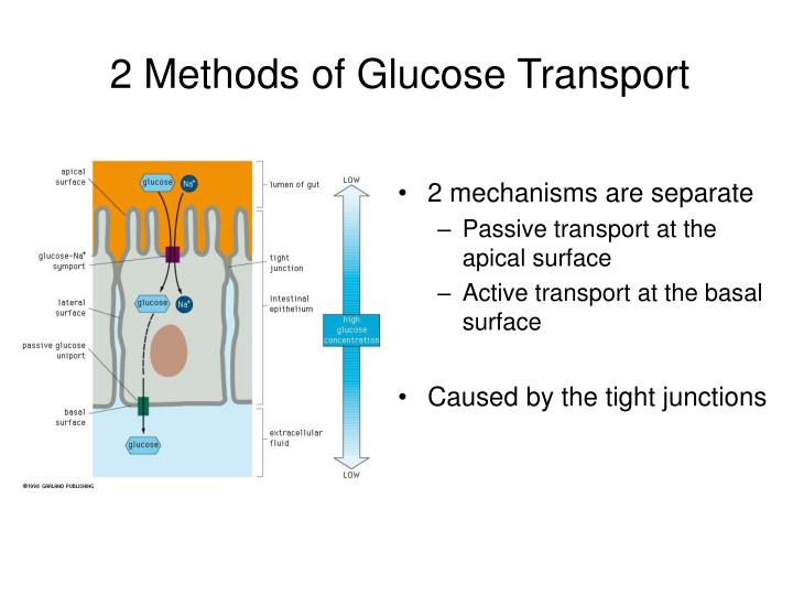 2 Methods of Glucose Transport