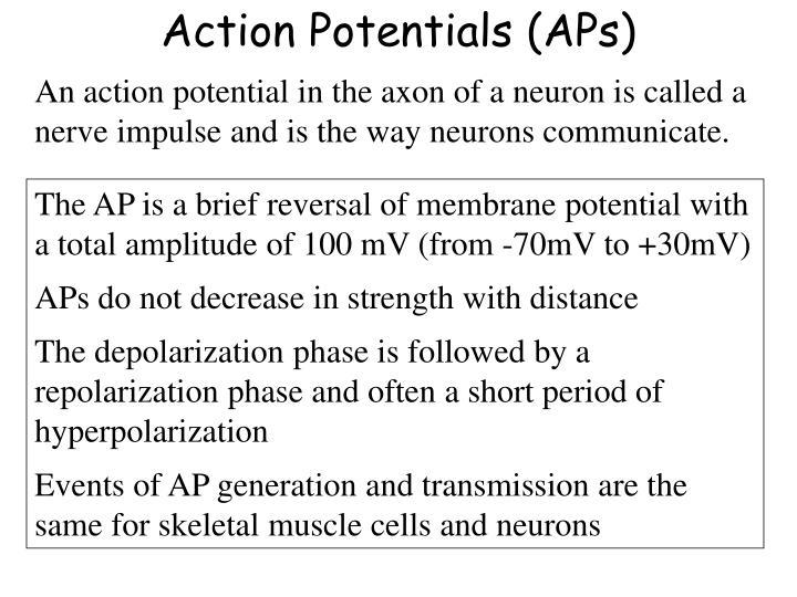 Action Potentials (APs)