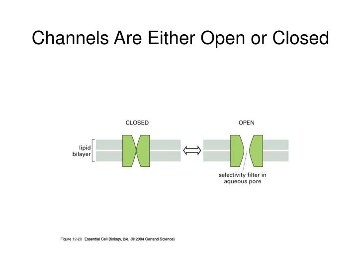Channels Are Either Open or Closed