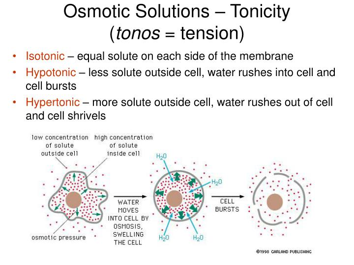 Osmotic Solutions – Tonicity