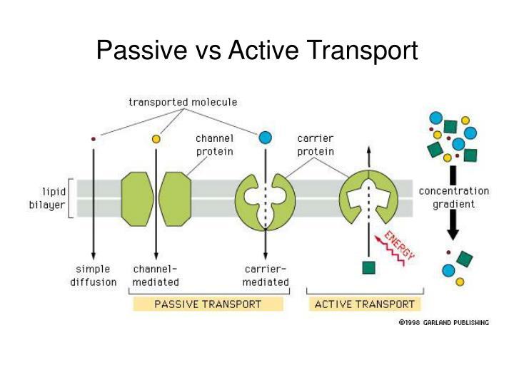 Passive vs Active Transport