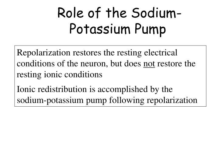 Role of the Sodium-Potassium Pump