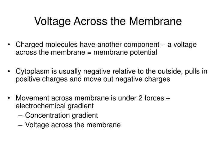 Voltage Across the Membrane