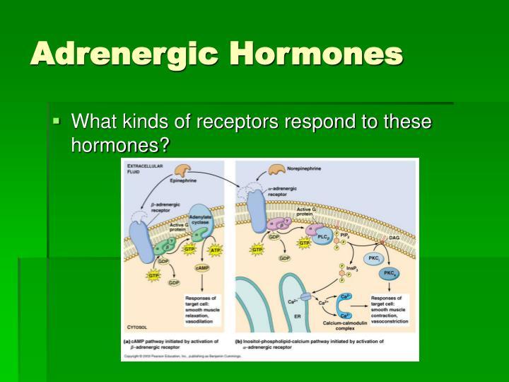 Adrenergic Hormones