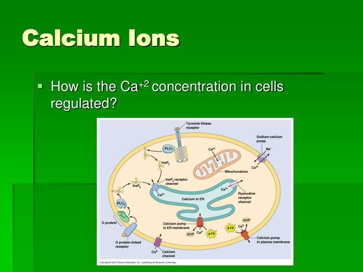 Calcium Ions