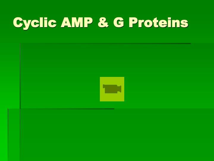 Cyclic AMP & G Proteins