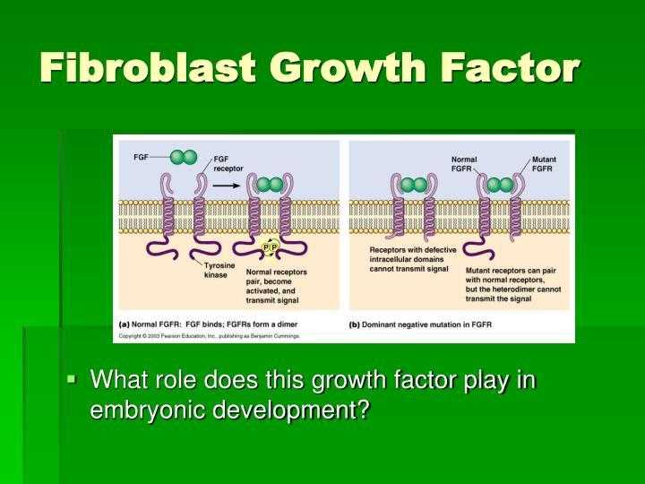 Fibroblast Growth Factor