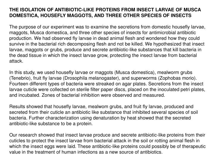 THE ISOLATION OF ANTIBIOTIC-LIKE PROTEINS FROM INSECT LARVAE OF MUSCA DOMESTICA, HOUSEFLY MAGGOTS, AND THREE OTHER SPECIES OF INSECTS