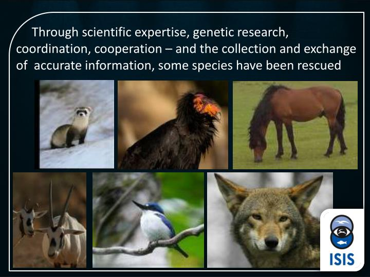Through scientific expertise, genetic research, coordination, cooperation – and the collection and exchange of  accurate information, some species have been rescued