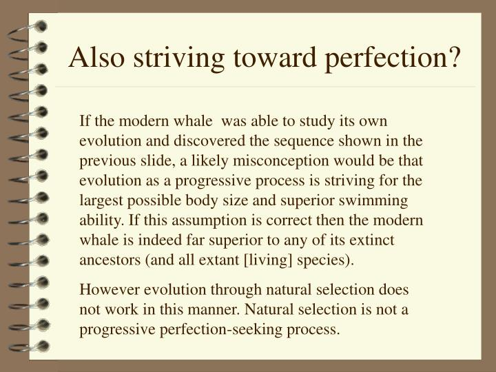 Also striving toward perfection?