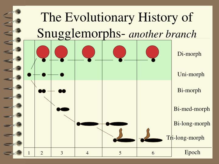 The Evolutionary History of Snugglemorphs-