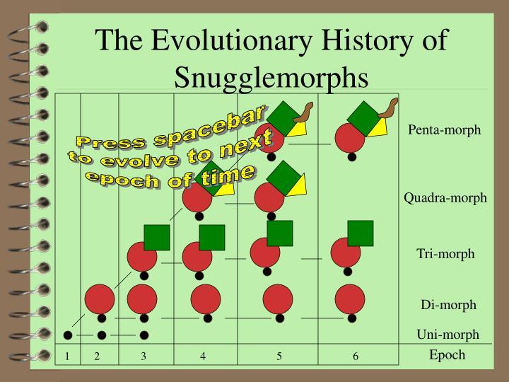 The Evolutionary History of Snugglemorphs