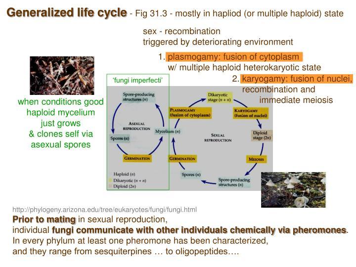 1. plasmogamy: fusion of cytoplasm