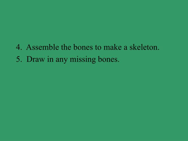 4.  Assemble the bones to make a skeleton.