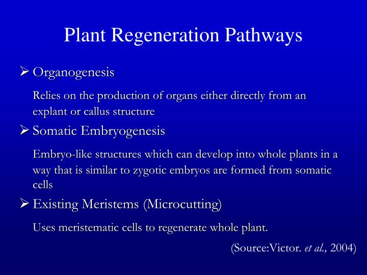 Plant Regeneration Pathways