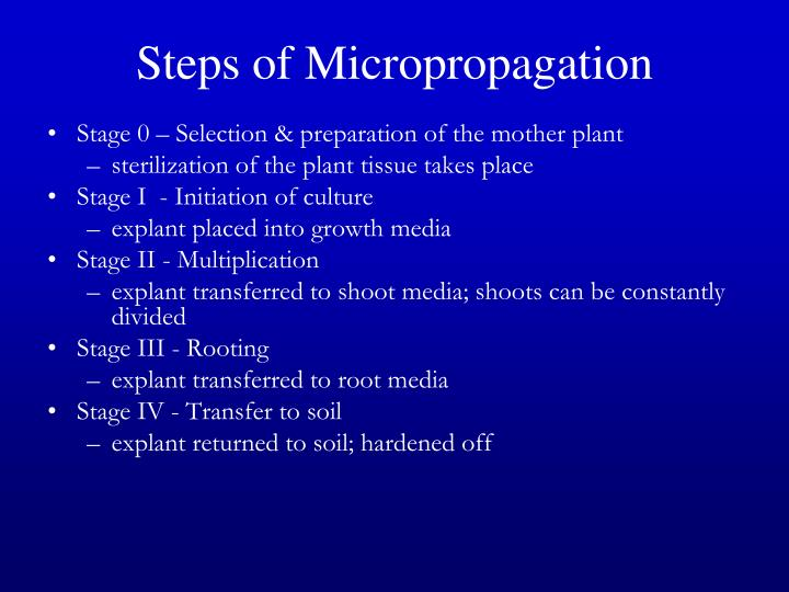 Steps of Micropropagation