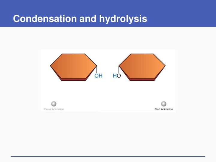 Condensation and hydrolysis