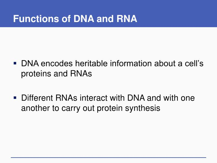 Functions of DNA and RNA