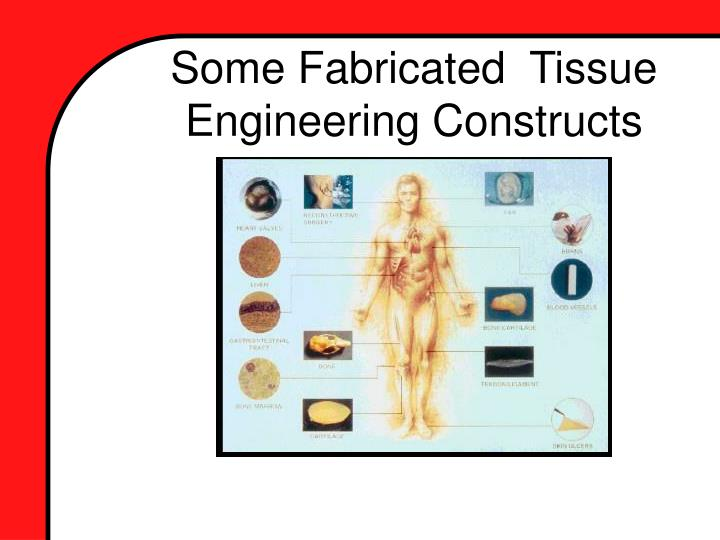 Some fabricated tissue engineering constructs