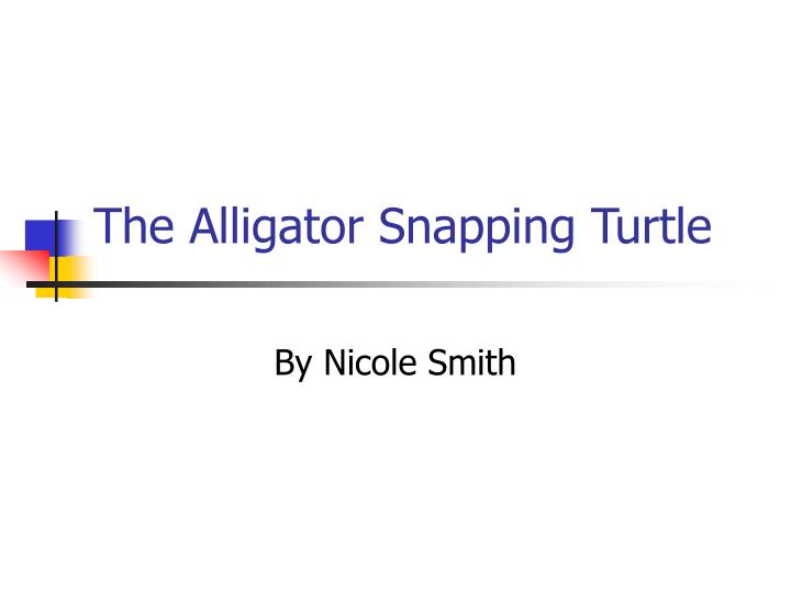 the alligator snapping turtle n.