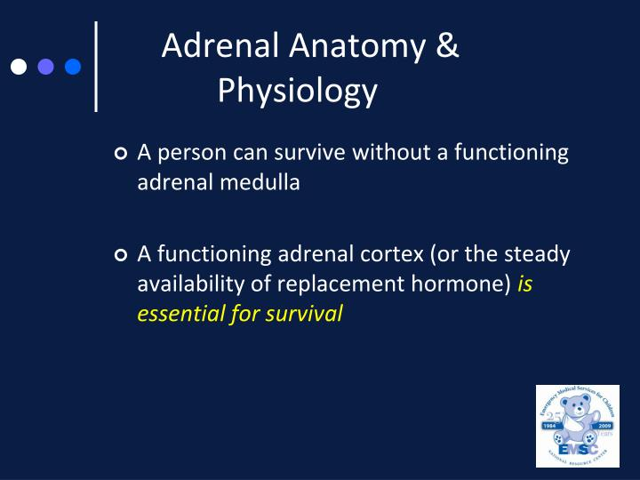 Adrenal Anatomy &  	Physiology