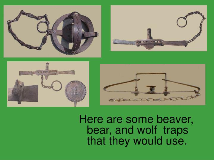 Here are some beaver, bear, and wolf  traps that they would use.